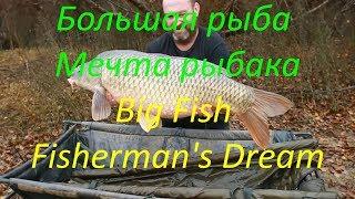 #Мечта_рыбака #рыба #ПРИКОЛЫ  #Big #fish. #Fisherman's #dream#Fishing#Рыбалка