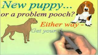 Online Dog Or Puppy Training For Your Chow Chow