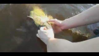 Kłusownictwo ryb nad zalewem Chańcza|Sieć wędkarska|Uwalnianie ryb z sieci|Kłusownicy|
