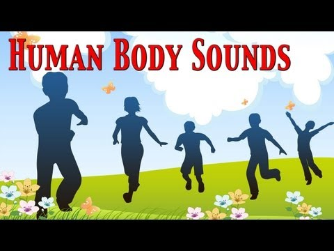 Human Body Sounds For Kids ★ learn - school - preschool - kindergarten