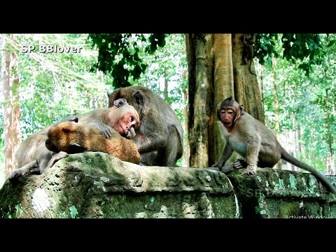 Jade Please Let Baby Monkey Nurse - SP BBlover - He Too Young from YouTube · Duration:  12 minutes 11 seconds
