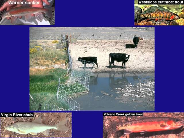 Ranching's Other Victims: Free-living Animals