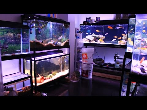 FISH ROOM TOUR