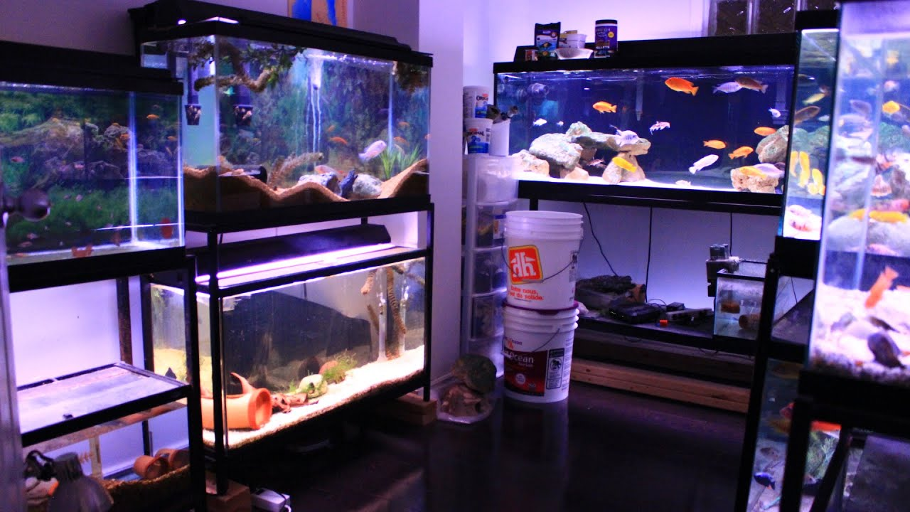 Room With Aquarium