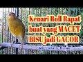 Kenari Macet Bisu Langsung Gacor Dor Dengan Kenari Roll Rapat Ini Hanya  Detik Kenari Jadi Gacor  Mp3 - Mp4 Download