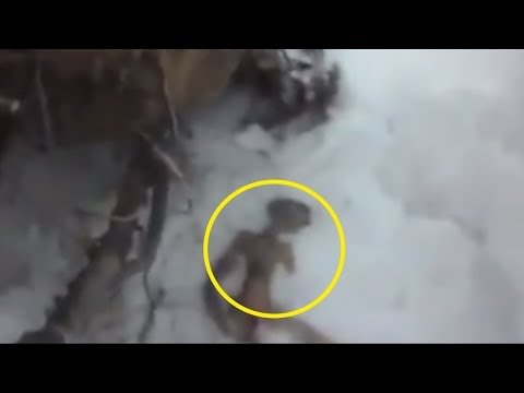 5 Aliens Caught On Camera & Spotted In Real Life!