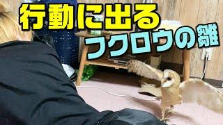 フクロウの足が短か過ぎてからかってたらキレられたw