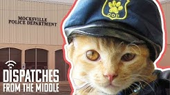 Sarge Butters: The Police Cat Who Turned A Small Town Upside Down | Dispatches From The Middle