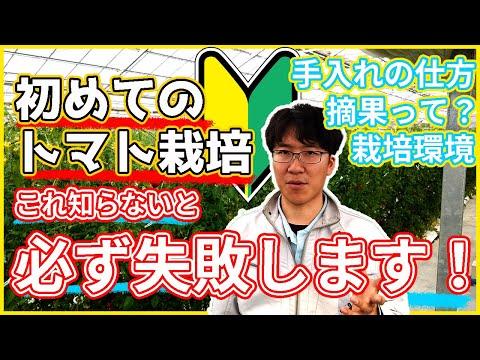 【解説】トマト栽培の仕方ー剪定の仕方/摘果の仕方/栽培する環境ー