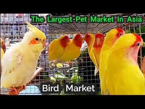Kolkata Bird Market Visit 23th June 2019 The Largest Pet Market In Asia