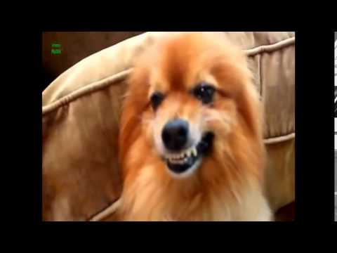 FUNNY SMILING DOGS EVER COMPILATION 1