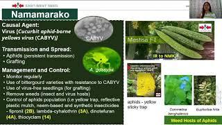 Persistent Vegetative State.