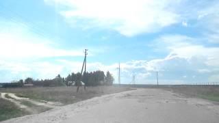 пос.Локоть Брасовский р-н Брянская обл. 2013г. август