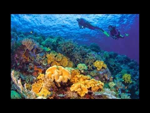 Wakatobi Islands indonesian travel
