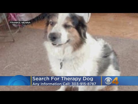 Therapy Dog Missing After Crash That Left Owner In Critical Condition