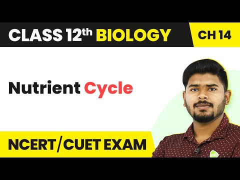 Nutrient Cycle - Ecosystem | Class 12 Biology