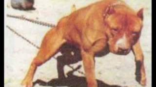Mike Vick Caught in the act beating dog(disturbing)