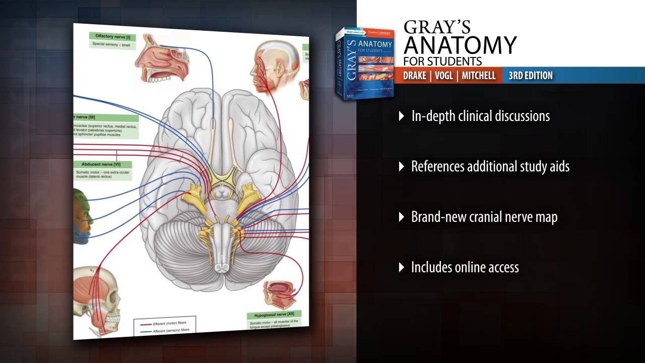 Grays Anatomy For Students 3rd Edition Youtube