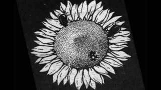 Suncokret - Covek Koga Znam