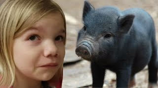 pet pig animal rescue league donation   life with jillian addie   babyteeth4