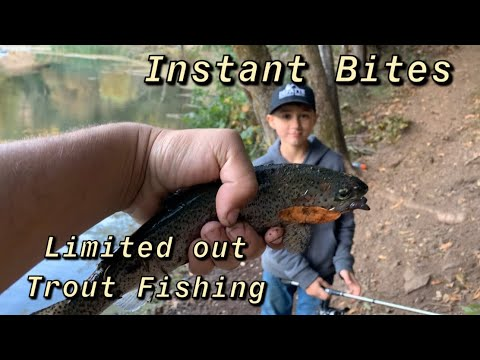 Trout Fishing Mill Creek Dams. Limited Out