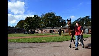 Tattersalls: Buying the next star at the sales