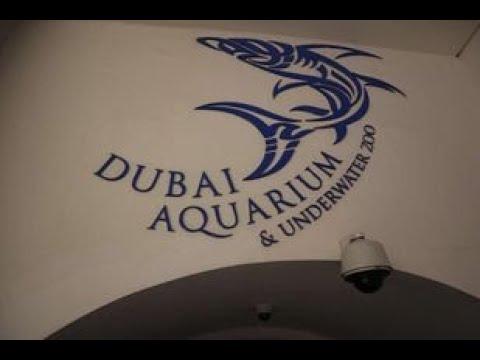 Dubai aquaruim & Underwater zoo