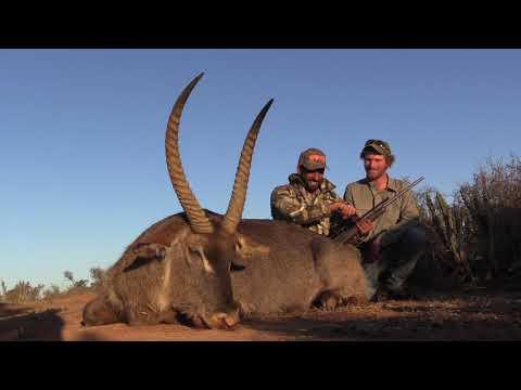 Waterbuck hunt with Thorndale Safari