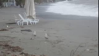 Βόλτα γλάρων στην Παραλία της Καλαμάτας