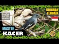 Suara Kicauan Burung Kacer Terbaik Part  Masteran Kacer Kacer Gacor Pancingan Kacer  Mp3 - Mp4 Download