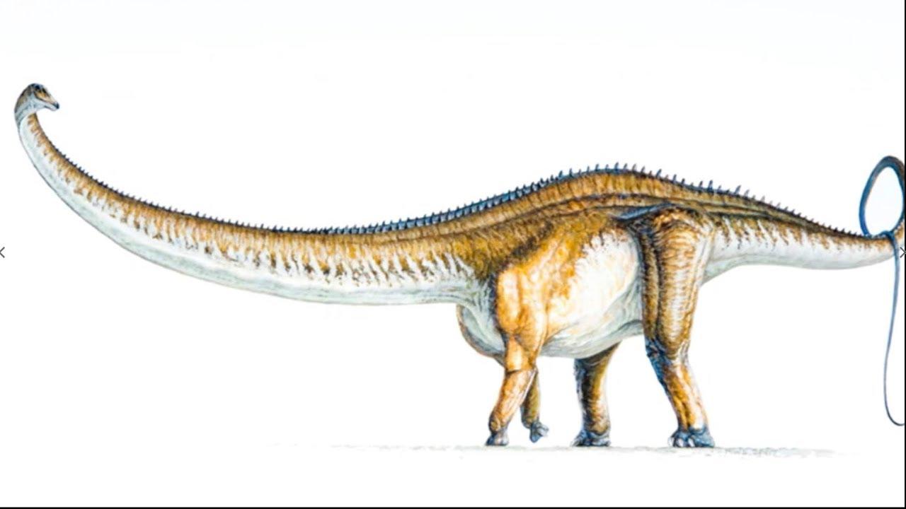 apatosaurus vs diplodocus - 1080×720