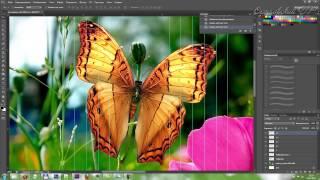 Анимация бабочки в Adobe Photoshop.