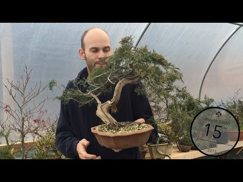 Selecting yamadori material for Bonsai, Peter Warren