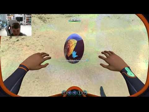 reefback egg - Myhiton