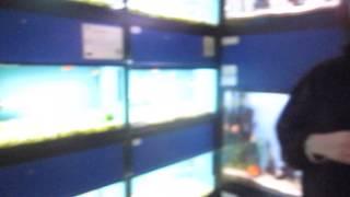 Welcome to Littleheath Aquatics
