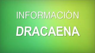 "INFORMACIÓN - Dracaena Marginata ""Dracaena Reflexa [CUIDADOS]"