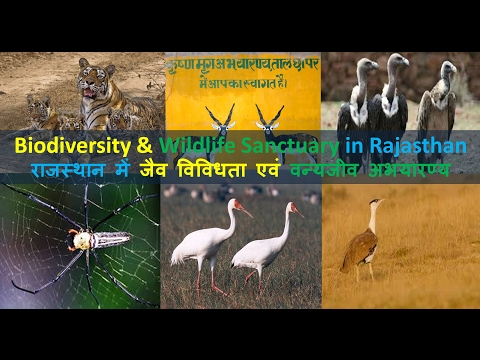 Biodiversity & Wildlife Sanctuary in Rajasthan | राजस्थान मे