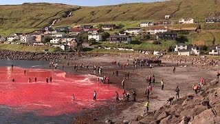 This Sea Is Full Of Real Blood  The Reason Why Makes My Stomach Turn