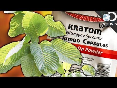 WTF Is Kratom & Is It A Dangerous Drug?