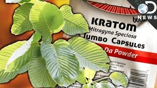 WTF Is Kratom & Is It A Dangerous Drug?