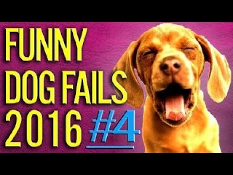 TRY NOT TO LAUGH OR GRIN - Funny Cat Fails Compilation 2016