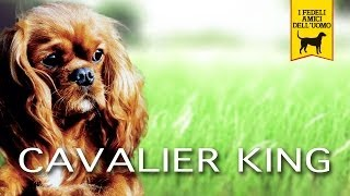 CAVALIER KING CHARLES SPANIEL trailer documentario