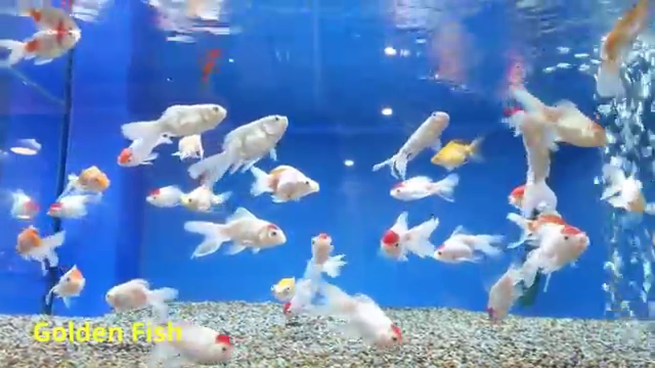 What does an aquarium fish look like