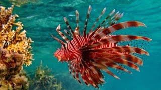 Морские обитатели Бора Бора и Муреа. Marine life Bora Bora and Moorea.