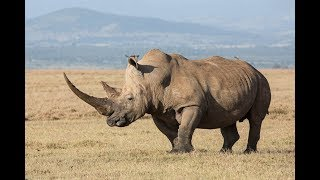 Интересные факты о Диких Животных | Документальный Фильм