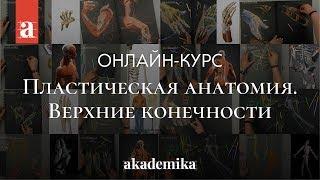 Курс по анатомии человека «Пластическая анатомия. Верхние конечности» | Анна Карпова ~ Akademika