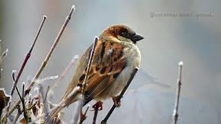 Lizz Wright - Wake Up Little Bird  - Lyrics