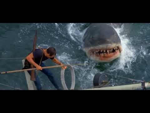Вопрос: О какой акуле фильм челюсти?