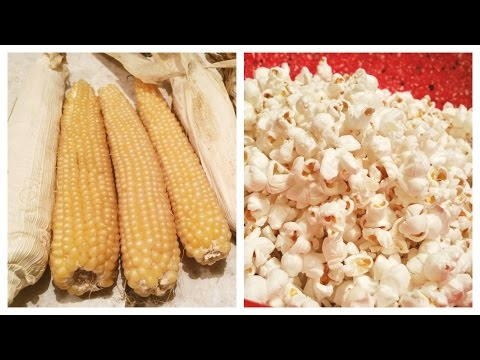 POPCORN | Farm to Table | Vlogmas Day 3