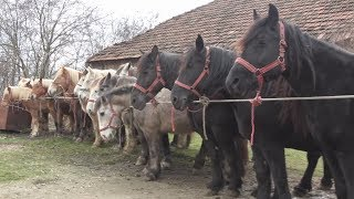 Caii lui Catalin de la Marghita, Bihor 27 nov 2017